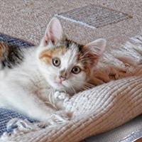 Under-rug Heater