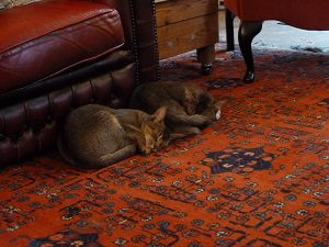 Anna's cats enjoying under rug heating